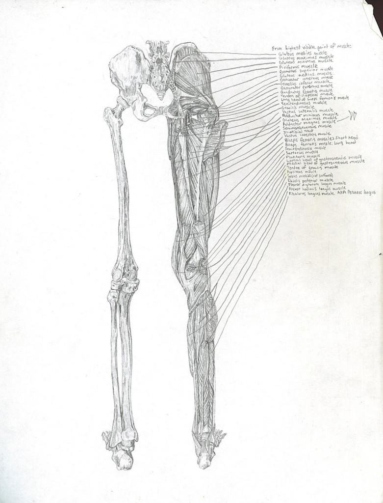 leg - anterior