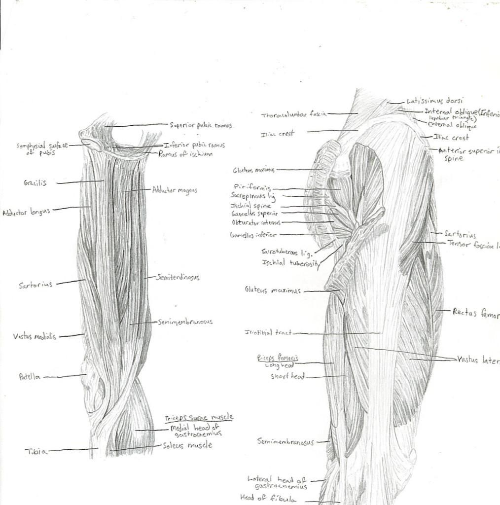 upper leg 2